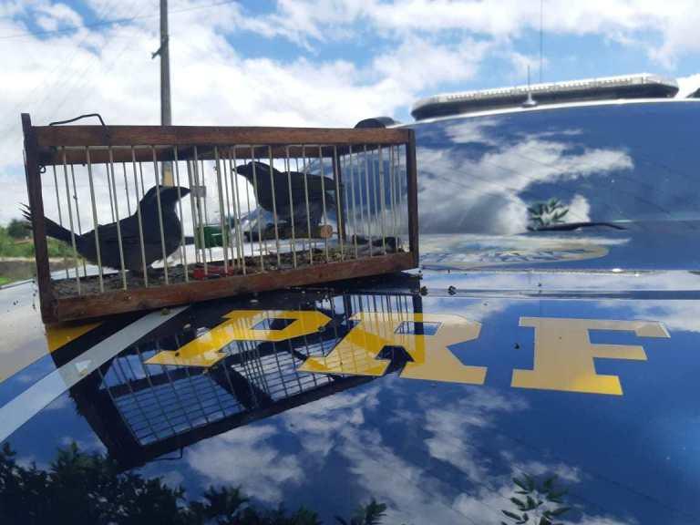 Polícia resgata aves silvestres aprisionadas em gaiola dentro de carro em Feira de Santana