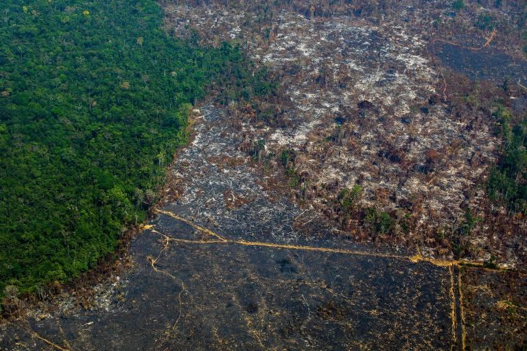 Desmatamento na Amazônia cresce 96% em setembro, indicam alertas do Inpe