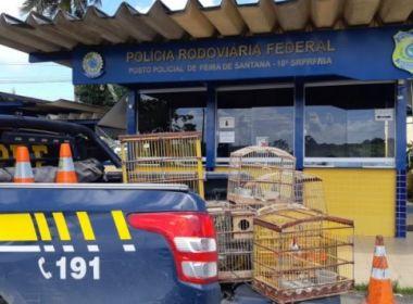 Feira de Santana: PRF flagra crime ambiental e resgata animais silvestres na BR 116