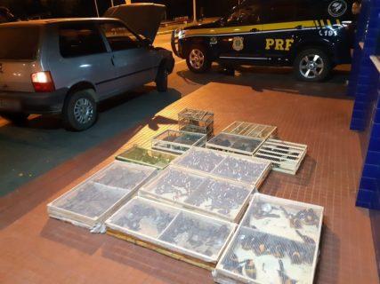 Após revista em carro, PRF descobre 500 aves silvestres na Bahia